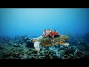 Bombay Bicycle Club and Flyte cover The Grateful Dead for World Turtle Day